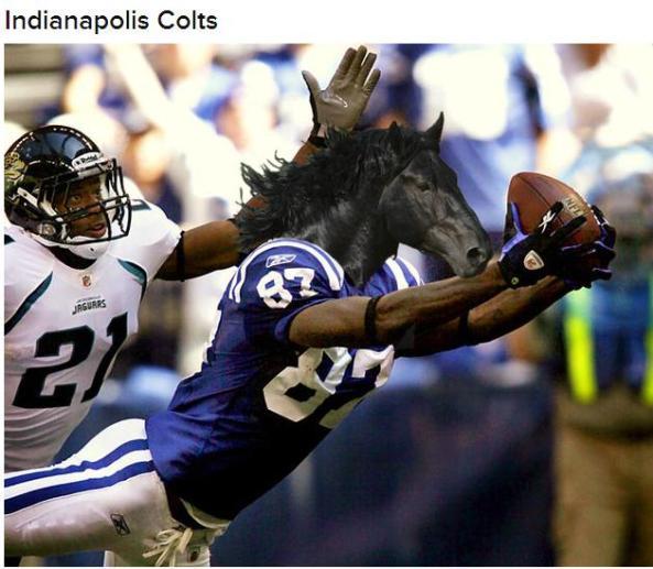 horsecolts